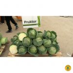 pructor-800×800-product_popup