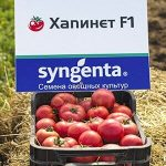 tomat-khapinet-f1-1000-semyan-97131515980793