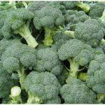 kapusta-brokkoli-monako-f1-10-sht-01-870×664