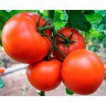 tomat-indeterminantnyj-bostina-f1